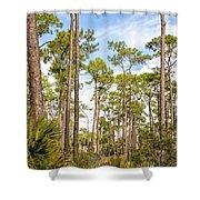 Ancient Looking Florida Forest At Aubudon Corkscrew Swamp Sanctuary Shower Curtain