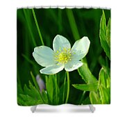 Just A Little White And Yellow Blossom Shower Curtain