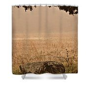 Just A Rock Shower Curtain
