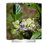 Just Blooming Shower Curtain