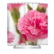 Just Carnations Shower Curtain
