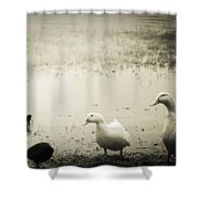 Just Duckie  Shower Curtain