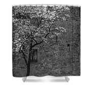 Just For A Walk Shower Curtain
