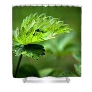 Just Green Shower Curtain by Jeremy Hayden