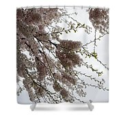 Just Lift Your Head And Enjoy Spring Shower Curtain