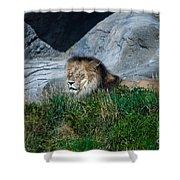 Just Lion Around Shower Curtain