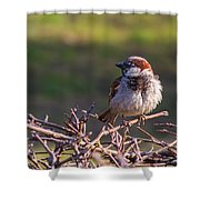Just Made It Through The Winter - Featured 3 Shower Curtain