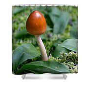 Just One Toadstool Shower Curtain