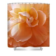 Just Peachy Begonia Flower Shower Curtain