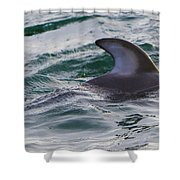 Just The Dorsal Shower Curtain