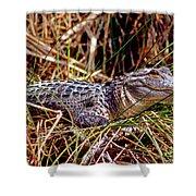 Juvenile American Alligator Shower Curtain