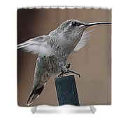 Juvenile Anna At Rest Shower Curtain