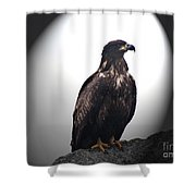 Juvenile Bald Eagle Year 1 Shower Curtain