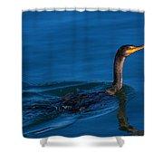 Juvenile Cormorant Swim Shower Curtain