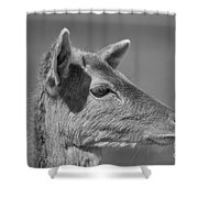 Juvenile Deer Close-up V2 Shower Curtain