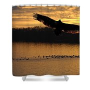 Juvenile Eagle Golden Sunset Shower Curtain