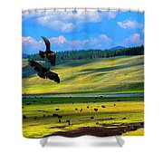 Juvenile Eagles Play Fight Shower Curtain