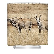 Juvenile Eland Shower Curtain
