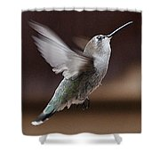Juvenile Female Anna's Hummingbird In Flight Shower Curtain