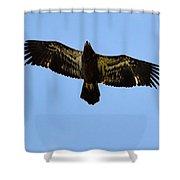 Juvenile Flight 8229 Shower Curtain