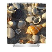 Juvenile Florida Fighting Conch Shower Curtain
