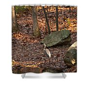 Juvenile Great Blue Heron  Shower Curtain