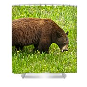 Juvenile Grizzly Bear In Kootenay Np-bc Shower Curtain