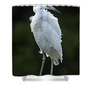 Juvenile Little Blue Heron On Sign Shower Curtain