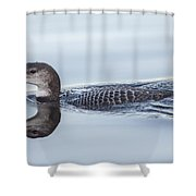 Juvenile Loon Reflection Shower Curtain