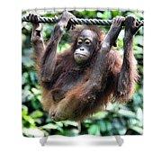 Juvenile Orangutan Borneo Shower Curtain