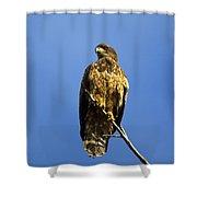 Juvenile Perch Shower Curtain