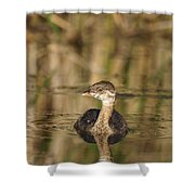 Juvenile Pied-billed Grebe Shower Curtain