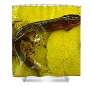 Juvenile Salamander Shower Curtain