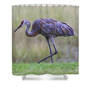 Juvenile Sandhill Shower Curtain