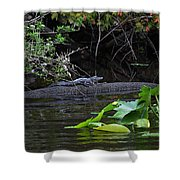 Juvie Gator Shower Curtain