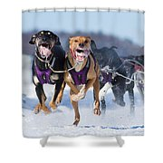 K9 Athletes Shower Curtain by Mircea Costina Photography