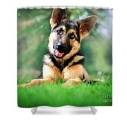 K9 Cute Shower Curtain