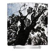 Kahikatea New Zealand Native Tree Shower Curtain