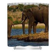 Kalahari Elephants Preparing To Cross Chobe River Shower Curtain
