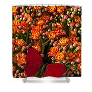 Kalanchoe Plant With Butterfly Shower Curtain