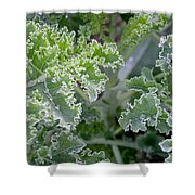 Kale Interior Shower Curtain