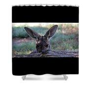 Kangaroo-4 Shower Curtain
