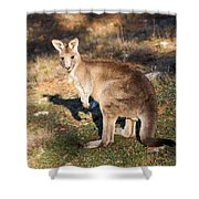 Kangaroo - Canberra - Australia Shower Curtain