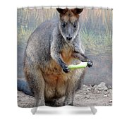 kangaroo Snack Shower Curtain