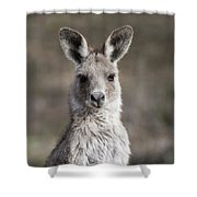 Kangaroo Shower Curtain