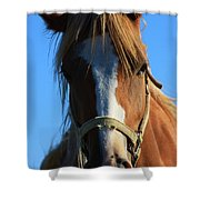Kansas Horse Potrait Red And White Shower Curtain by Robert D  Brozek