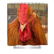 Kansas Red Orange Rooster Close Up Shower Curtain by Robert D  Brozek