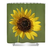 Kansas Wildsunflower With Green Background Shower Curtain