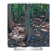 Kapok Trees Along The Trail In Manual Antonio National Preserve-costa Rica Shower Curtain