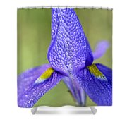 Karoo Iris 2 Shower Curtain